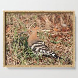 Eurasian hoopoe posed in the grass of a meadow Serving Tray