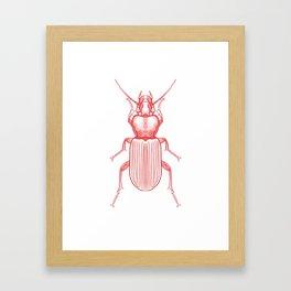 Red Beetle Framed Art Print
