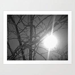 sweaty and sunny wood Art Print