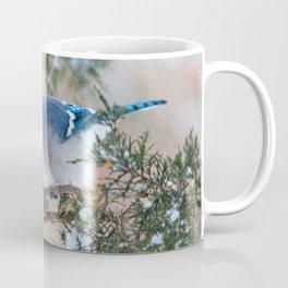Hunkered Down (American Blue Jay) Coffee Mug