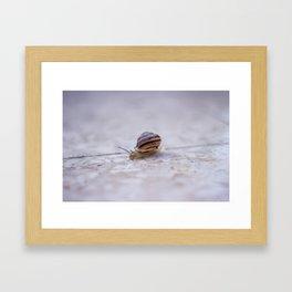 Lonely Snail Framed Art Print