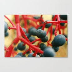 Wild Berries of the Don Canvas Print