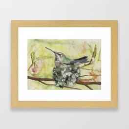 Anna's on Nest Framed Art Print