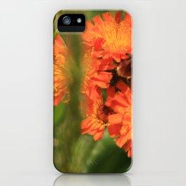 Orange Hawkweed Wildflowers iPhone Case