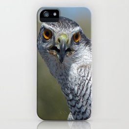 Northern Goshawk Close iPhone Case