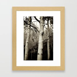 Three Aspen Trees Framed Art Print