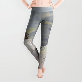 Extremal Groundhog  or King of the Mountain Leggings