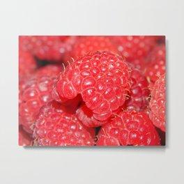 Red Raspberries Freshly Picked Metal Print