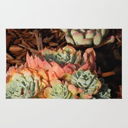 Succulents: Sunrise Fruit Rug