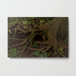 The Gaian gymnosperm Metal Print
