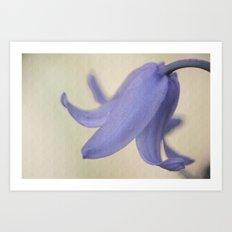 Spanish Bluebell Flower Art Print