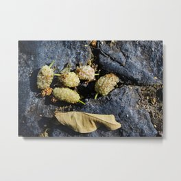 Mulberry fruits Metal Print