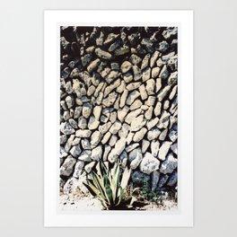 cactus... Art Print