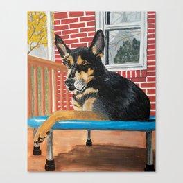 Trampoline Dog  Canvas Print