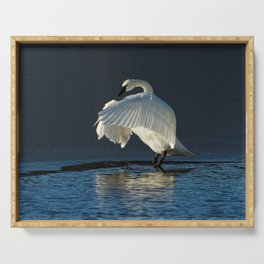 Trumpeter Swan Flapping Serving Tray