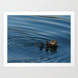 Alaskan Sea Otter waving Art Print