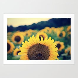 sunflower beauty no. 2 Art Print