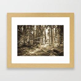 Quiet Forest II Framed Art Print