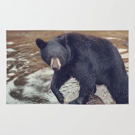 Young black bear in a pond Rug