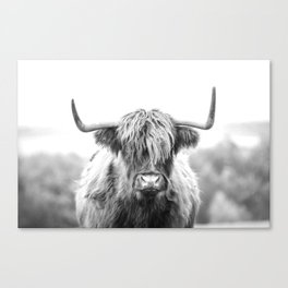 Highland Cow Longhorn in a Field Black and White Canvas Print