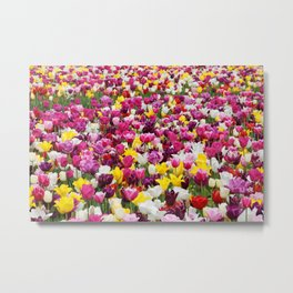 Collection of different tulips in Holland Metal Print