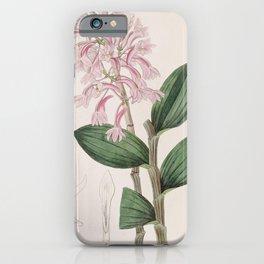 Flower 047 dendrobium kuhlii Kuhl s Dendrobe28 iPhone Case