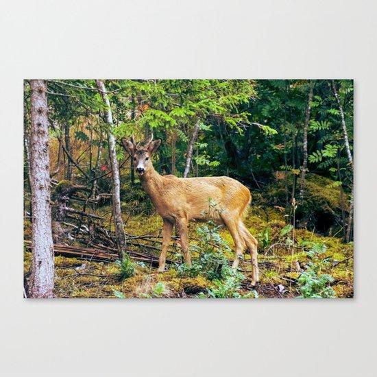 The Wandering Deer Canvas Print