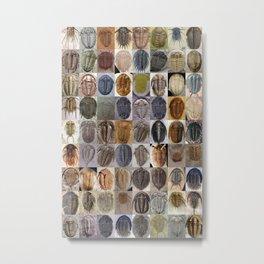 Trilobite Montage Metal Print
