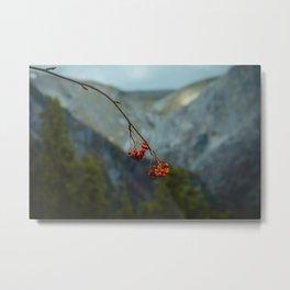 Mountain Berries Metal Print