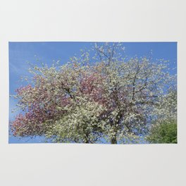 Pink and White Blossom - Blue Sky Rug