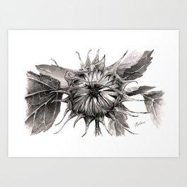 Black Sunflower Art Print
