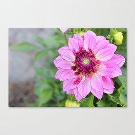 Marquette Pink Flower Canvas Print