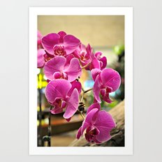 Orchids in Singapore Art Print