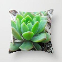 Graptopetalum Succulent Throw Pillow