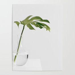 Single Monstera Leaf In Clear Glass Zen Minimalist House Plant Photo Poster