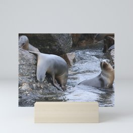 California Sea Lions in Monterey Bay Mini Art Print