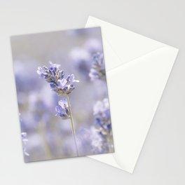 Lavenderfield - Lavender Summer Flower Flowers Floral Stationery Cards