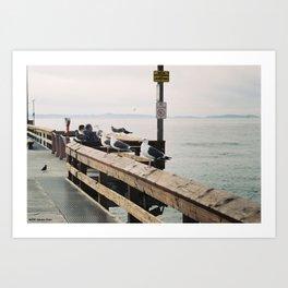 Seaguls Art Print