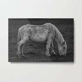 Italian Horse Metal Print