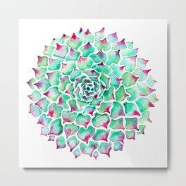 Echeveria Succulent Metal Print