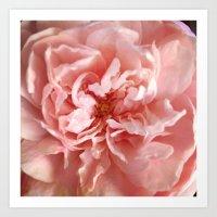 Fresh Flower Art Print