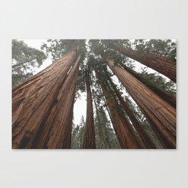 Sky Climbers - Sequoia Canvas Print
