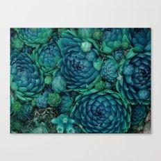 Turquoise succulent Canvas Print