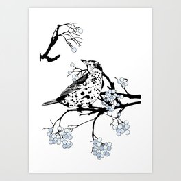 Mistle Thrush. Art Print