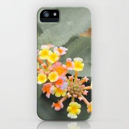 Just Lantana iPhone Case