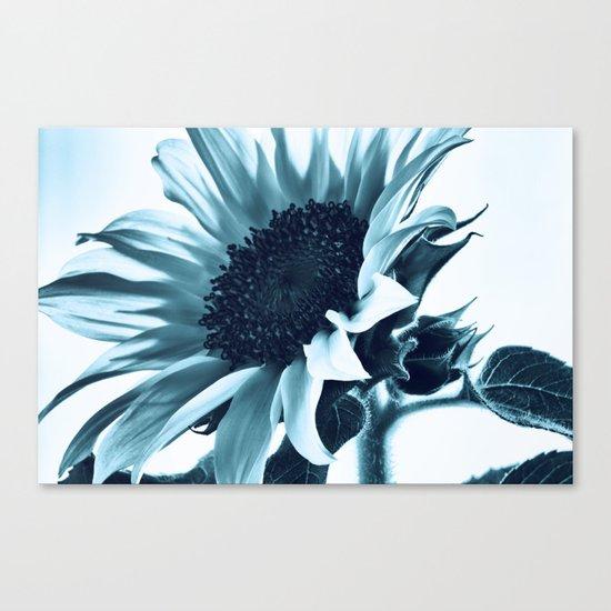 Blue Sunflower Canvas Print