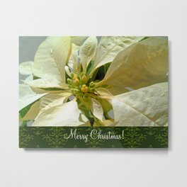 Pale Yellow Poinsettia 1 Merry Christmas S6F1 Metal Print