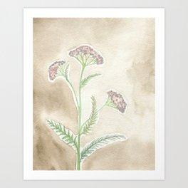 Pink Yarrow Art Print