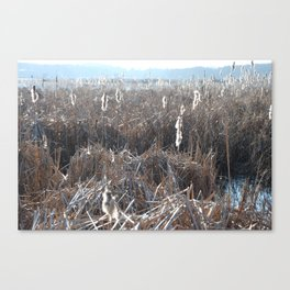 From a walk in Massachusetts.  Canvas Print