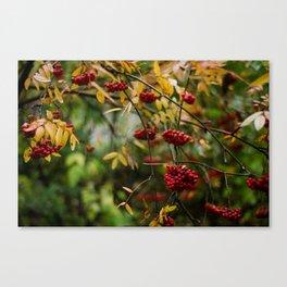 Bright Autumn VI Canvas Print
